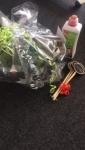 Team Abrechnung - neues Hobby Gärtnern